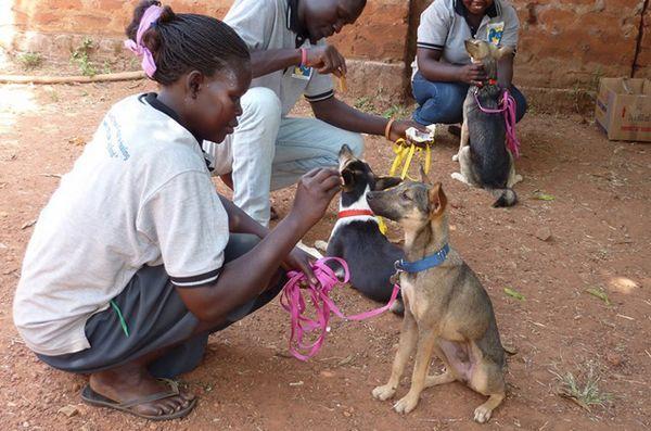 Les chiens de confort changent la vie des survivants ougandais