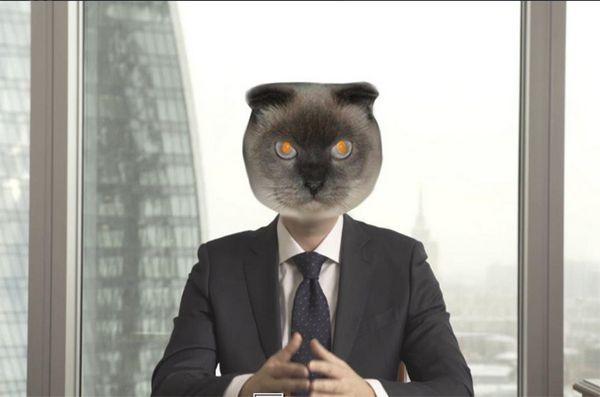 Le camarade cat court pour le président en Russie
