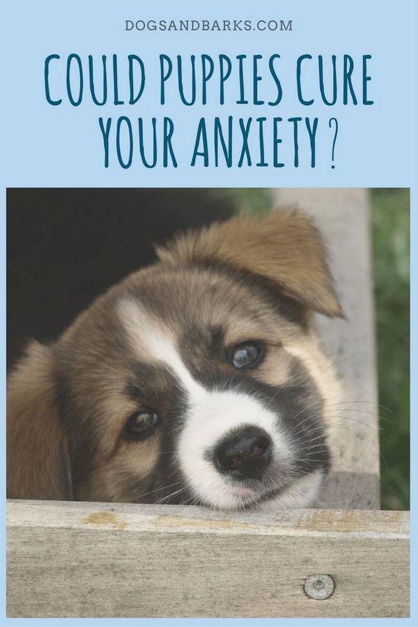 Les chiots pourraient-ils guérir votre anxiété?