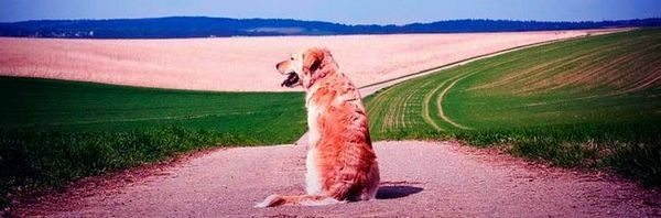 Crayons pour chiens - le besoin et le bénéfice de l`application