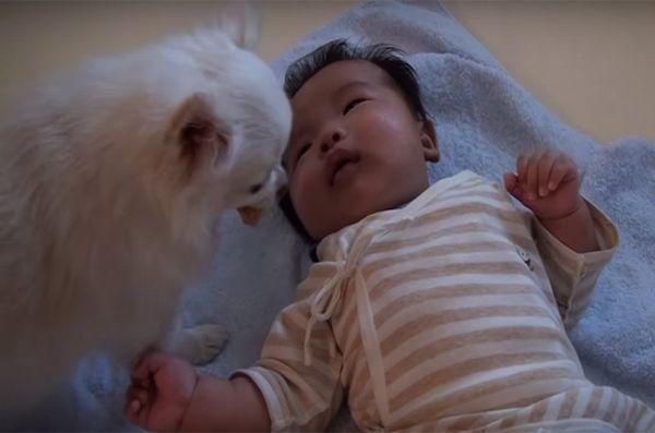Crying baby a offert un traitement par un chien concerné [vidéo]