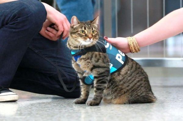 Un chat malin s`infiltre dans le programme de thérapie canine de l'aéroport [vidéo]