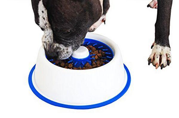 Le bol pour chien Dentadish arrête le ballonnement et brosse les dents