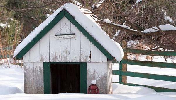 Maison de chien diy par temps froid: gardez votre chien au chaud en hiver
