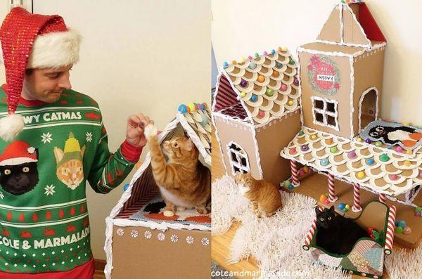 La maison de bricolage en pain d`épice pour chats est trop tentante de résister [vidéo]