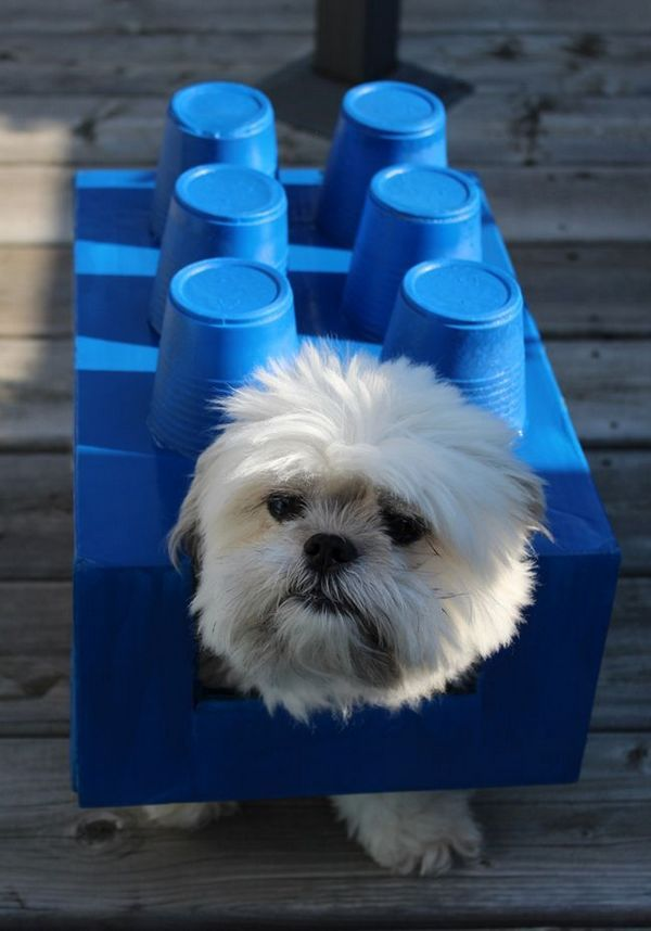 Costumes de bricolage halloween pour chiens: lego dogo