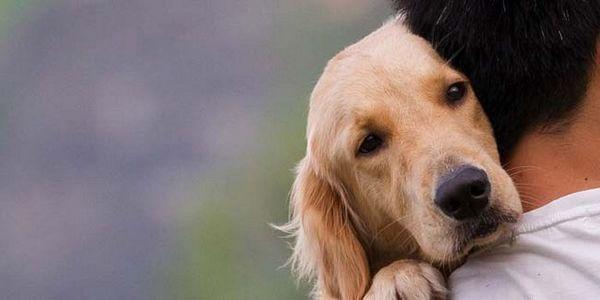 Les chiens ont-ils des sentiments? La science a la réponse