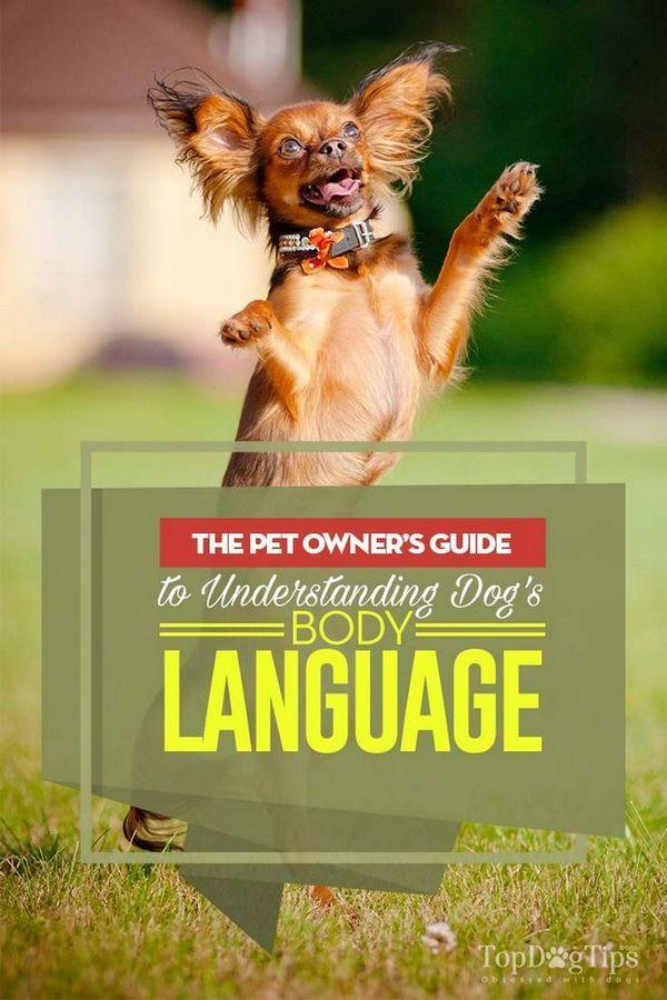 Langage corporel du chien: guide du propriétaire pour comprendre les chiens