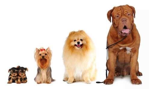 Races de chiens pour les enfants