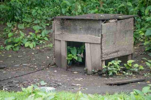 WATCH: Un chien enchaîné pour les trois premières années de vie court pour la première fois