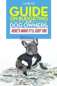 Guide sur les coûts et la budgétisation des chiens pour les propriétaires d`animaux