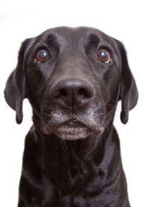 La domination des chiens: comment l`utiliser pour former plusieurs chiens