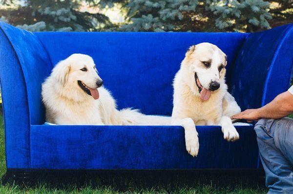 Les contes pour chiens sont comme le paradis sur terre pour les chiens et les hommes