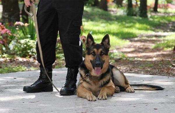 Certification de dresseur de chiens: guide pour les débutants