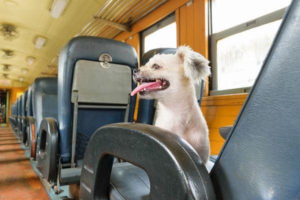 Les chiens sont désormais autorisés à monter à bord des trains amtrak