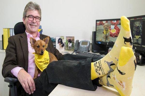 Les chiens de confiance veulent que vous donniez des chaussettes, pas des chiens cette saison de vacances