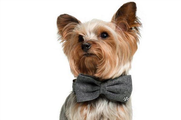 Don votre chien dans les vêtements pimpants cette saison des fêtes