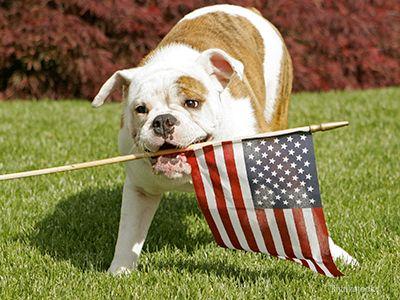 Top 5 des conseils du Dr Ruth pour un animal de compagnie en sécurité 4 juillet