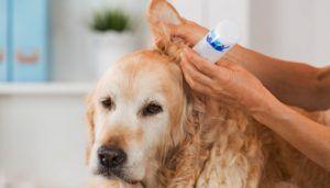 Prévention des acariens chez les chiens