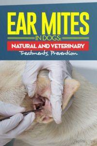 Le guide sur les acariens chez les chiens