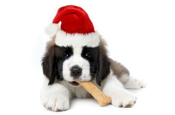Fda conseille aux propriétaires de chiens de se méfier des friandises pendant le temps des fêtes