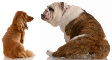 Fibre pour chien: y a-t-il un avantage?