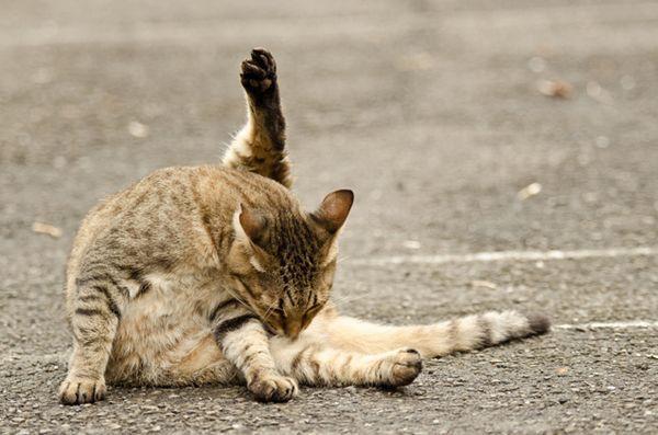 Faits amusants sur les boules de poils de chat