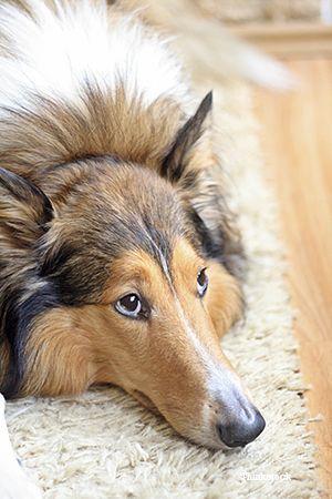 Gastroentérite chez le chien