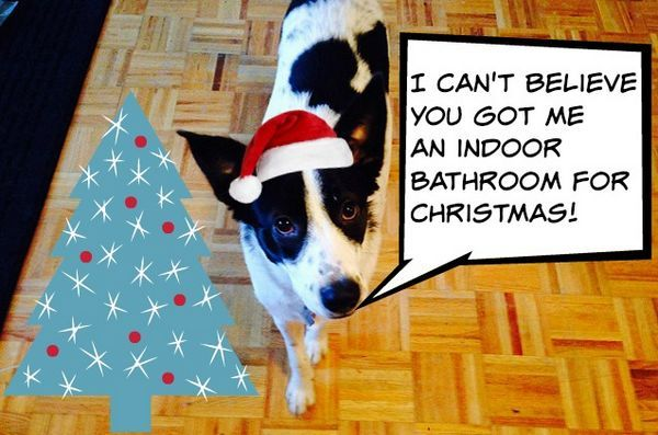 Gen y dogma: j`ai peur que mon chien ne ruine Noël