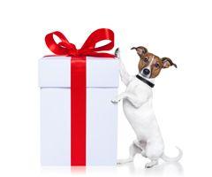Cadeaux pour les propriétaires de chiens