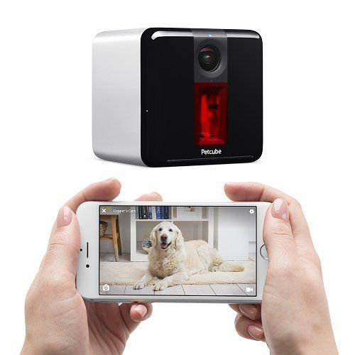 Concours: caméra de jeu de chien petcube (valeur de 199 $)