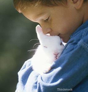 Les lapins de héros sauvent une famille du feu