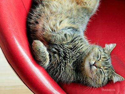 Chat heureux couché
