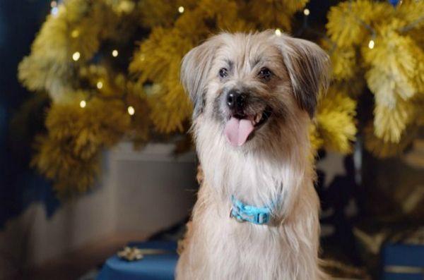 Bravo aux chiens dans les nouveaux woofmas joyeux du film!