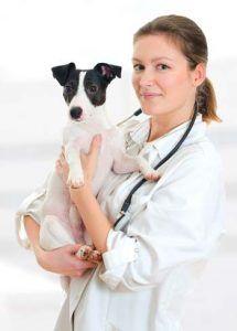 Soins holistiques pour chiens: le guide ultime fondé sur des preuves