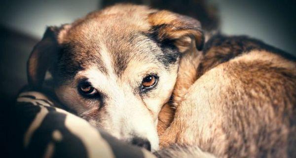 Comment les propriétaires perdent leurs chiens