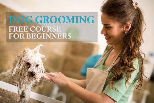 Comment toiletter un chien: guide tout-en-un pour les débutants