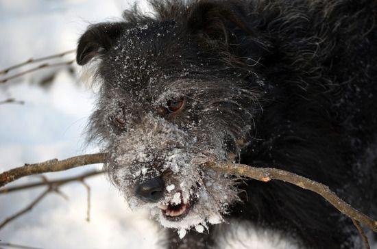 Chien noir en hiver