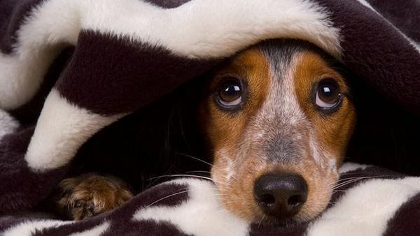Comment garder votre chien en sécurité et calme pendant les feux d`artifice