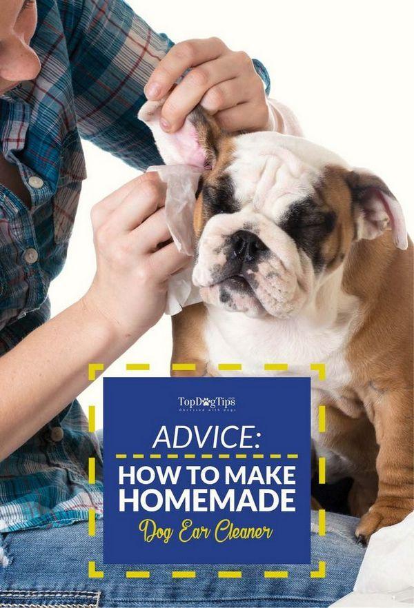 Comment faire un nettoyant d`oreille pour chien