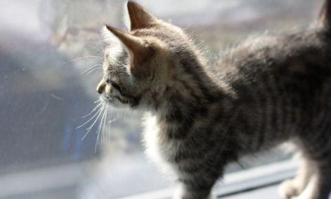 comment-protéger-mon-chat-à-la-maison
