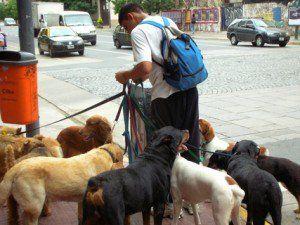 Comment démarrer une entreprise de marche de chien