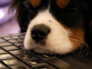 Comment lancer une entreprise liée aux chiens