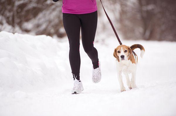 Comment commencer à courir avec votre chien