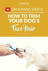 Comment couper les poils de votre chien avec des ciseaux