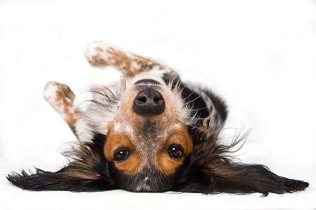 examine ton chien