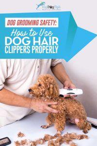 Comment utiliser les tondeuses à chien pour couper ou couper les cheveux des chiens