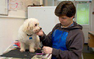 Comment rédiger un plan d`affaires de toilettage pour chien