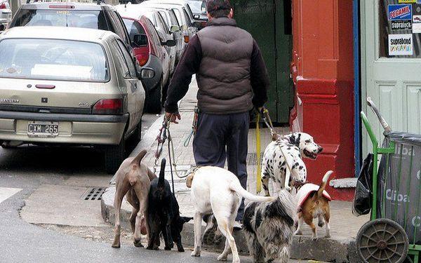 Comment rédiger un plan d`affaires de marche pour chien