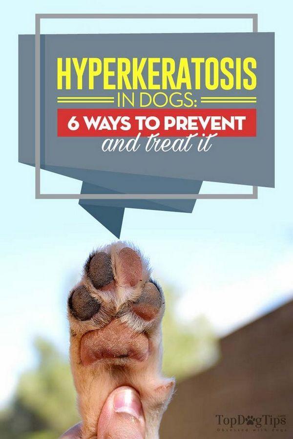 Hyperkératose chez le chien: 6 façons de la prévenir et de la traiter